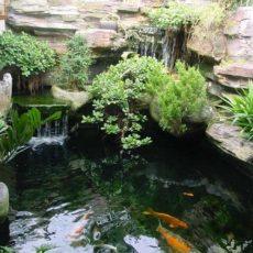 Cách xử lý nguồn nước giếng khoan để nuôi cá cảnh
